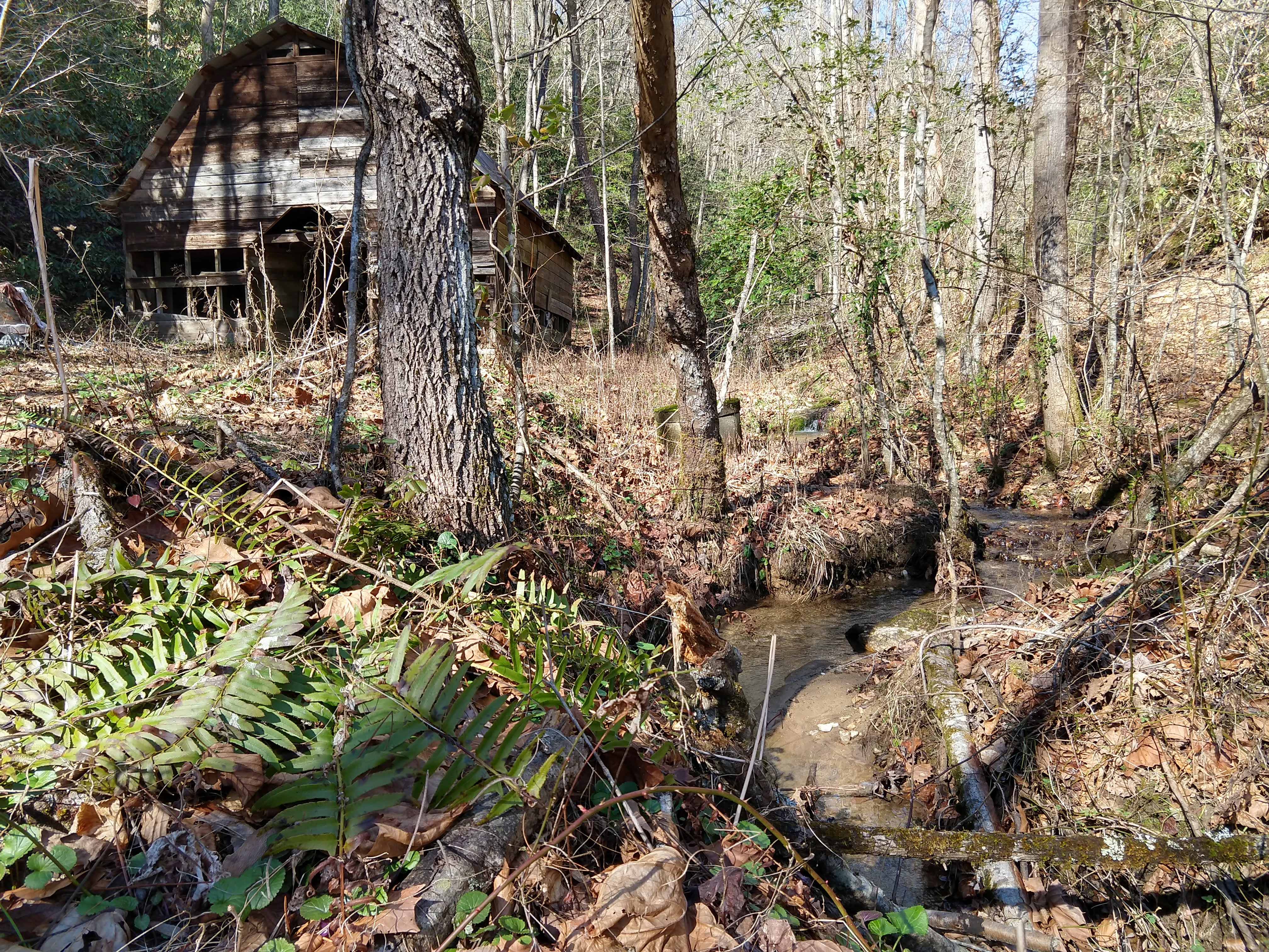 Photo of an old barn, seen through the woods, with a small creek in the foreground