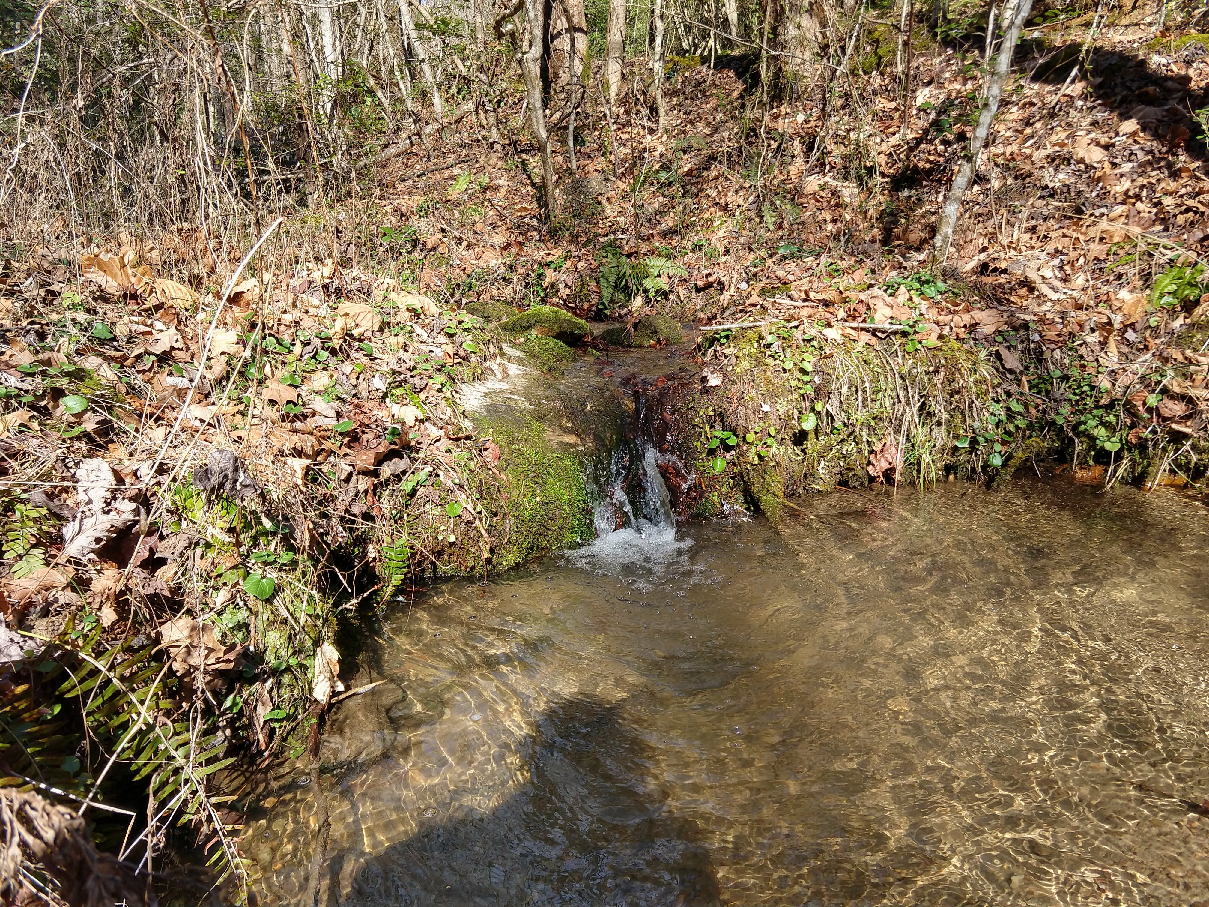 Photo of a small creek with a little waterfall into a pool