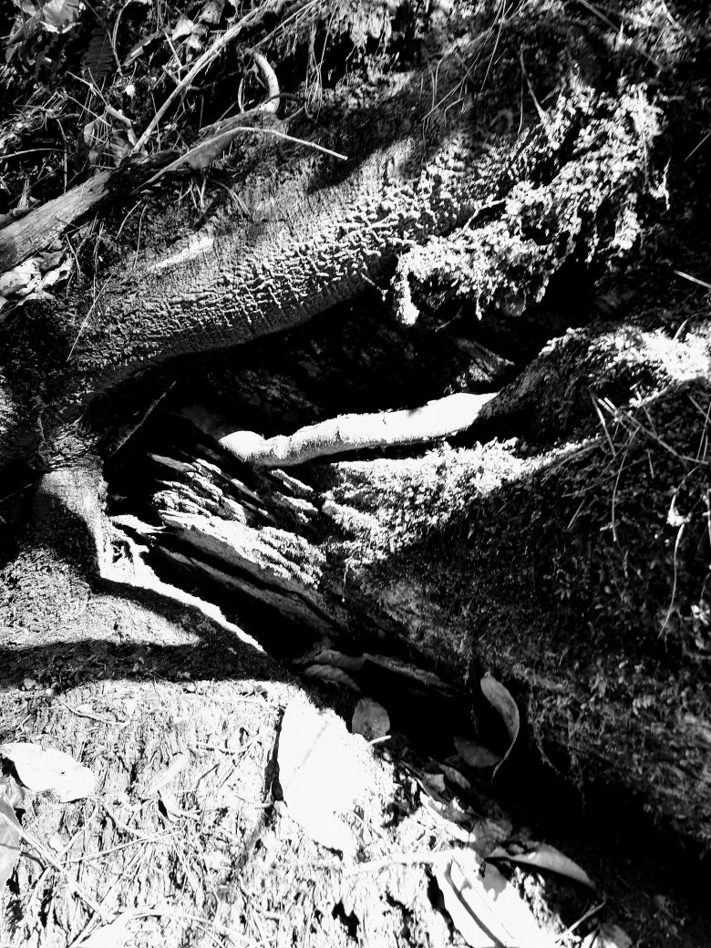 Black and white photo of roots in soil and stones