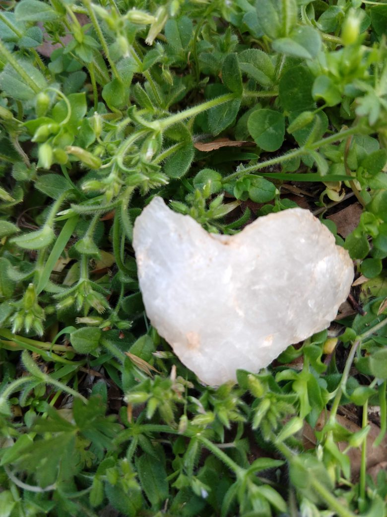 Photo of a piece of white quartz lying on a natural green background. The quartz is shaped like a heart.