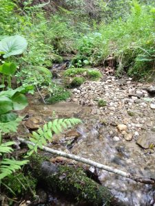 photo of a woodland creek with a fern in the foreground